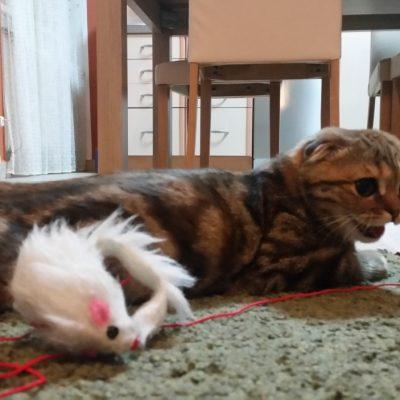 Klapouchá koèka - ze života